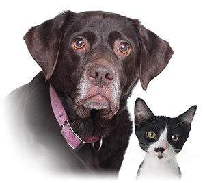 old dog young kitten pet funeral